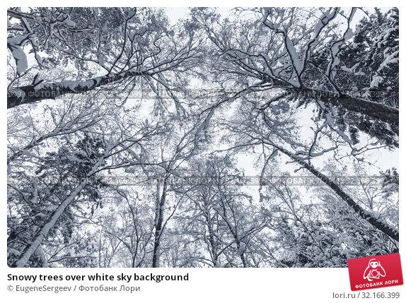 Купить «Snowy trees over white sky background», фото № 32166399, снято 26 января 2019 г. (c) EugeneSergeev / Фотобанк Лори