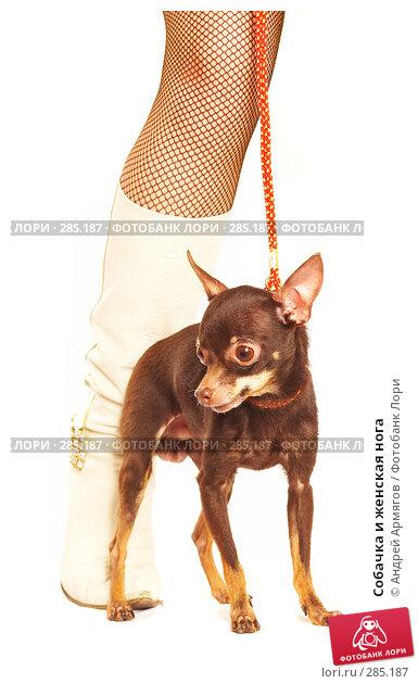 Собачка и женская нога, фото № 285187, снято 5 апреля 2007 г. (c) Андрей Армягов / Фотобанк Лори