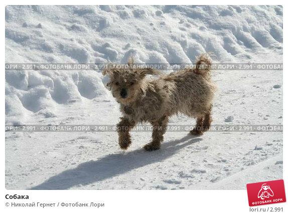 Собака, фото № 2991, снято 28 марта 2006 г. (c) Николай Гернет / Фотобанк Лори