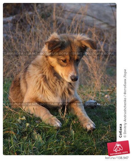Купить «Собака», фото № 138947, снято 29 ноября 2007 г. (c) Dmitriy Andrushchenko / Фотобанк Лори