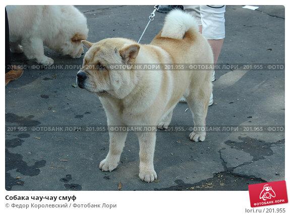 Собака чау-чау смуф, фото № 201955, снято 17 июля 2005 г. (c) Федор Королевский / Фотобанк Лори
