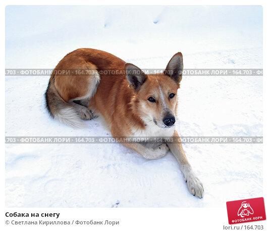 Купить «Собака на снегу», фото № 164703, снято 22 декабря 2007 г. (c) Светлана Кириллова / Фотобанк Лори