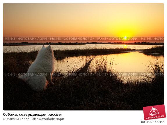 Собака, созерцающая рассвет, фото № 146443, снято 30 апреля 2006 г. (c) Максим Горпенюк / Фотобанк Лори
