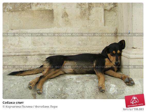 Собака спит, фото № 106883, снято 25 сентября 2007 г. (c) Корчагина Полина / Фотобанк Лори