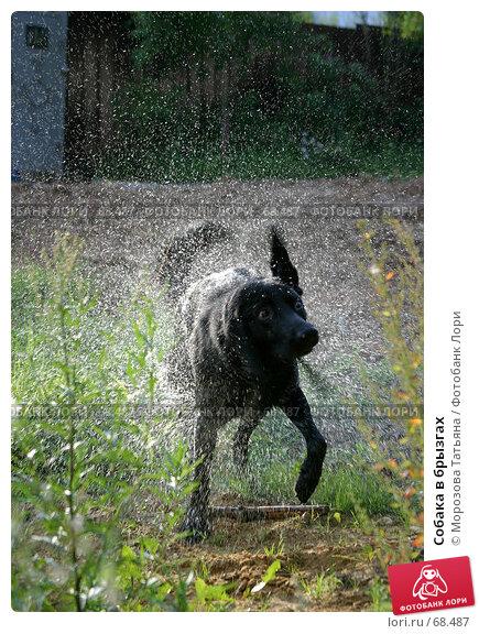 Собака в брызгах, фото № 68487, снято 1 сентября 2004 г. (c) Морозова Татьяна / Фотобанк Лори