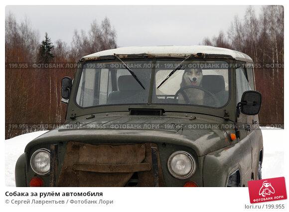 Купить «Собака за рулём автомобиля», фото № 199955, снято 9 февраля 2008 г. (c) Сергей Лаврентьев / Фотобанк Лори