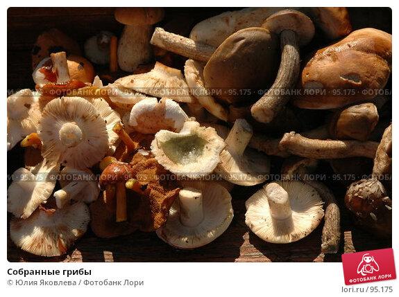 Купить «Собранные грибы», фото № 95175, снято 8 августа 2006 г. (c) Юлия Яковлева / Фотобанк Лори