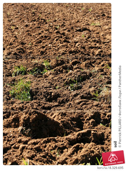 Купить «soil», фото № 8329695, снято 24 июня 2019 г. (c) PantherMedia / Фотобанк Лори