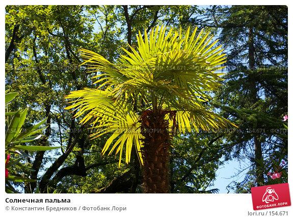 Солнечная пальма, фото № 154671, снято 22 апреля 2006 г. (c) Константин Бредников / Фотобанк Лори