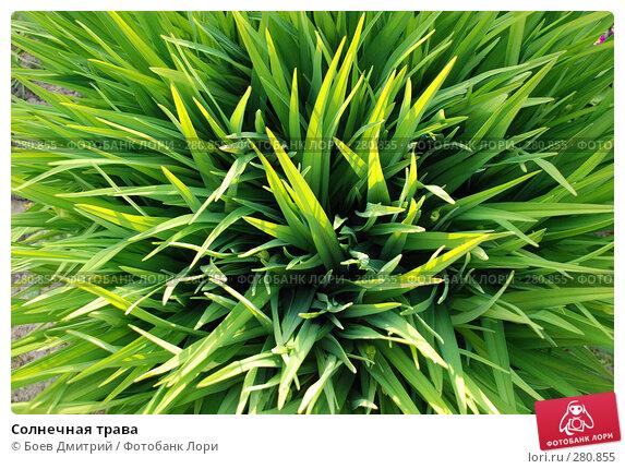Солнечная трава, фото № 280855, снято 5 мая 2008 г. (c) Боев Дмитрий / Фотобанк Лори