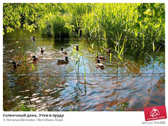 Солнечный день. Утки в пруду, фото № 314895, снято 8 июня 2008 г. (c) Наталья Волкова / Фотобанк Лори