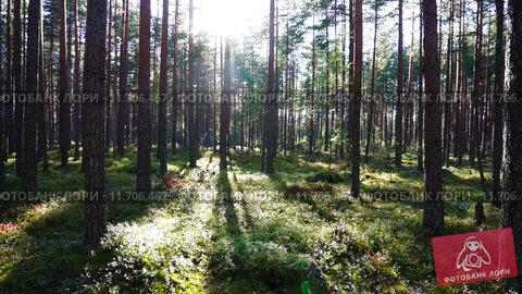Солнечный лес. Стоковое видео, видеограф Михаил Коханчиков / Фотобанк Лори