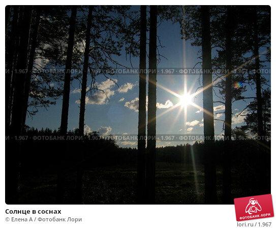 Солнце в соснах, фото № 1967, снято 3 января 2004 г. (c) Елена А / Фотобанк Лори