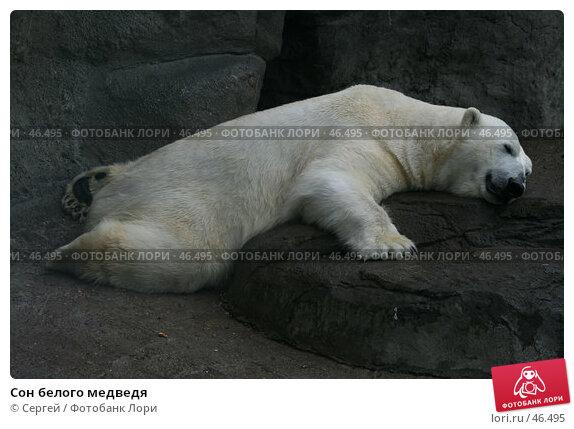 Сон белого медведя, фото № 46495, снято 22 мая 2007 г. (c) Сергей / Фотобанк Лори