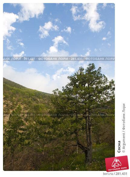 Купить «Сосна», фото № 281431, снято 28 апреля 2008 г. (c) Argument / Фотобанк Лори