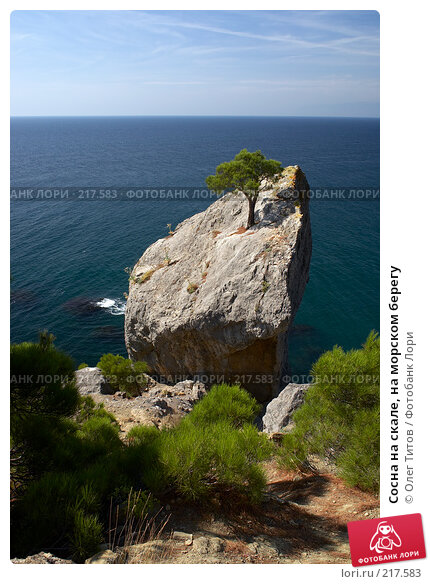 Купить «Сосна на скале, на морском берегу», фото № 217583, снято 19 сентября 2006 г. (c) Олег Титов / Фотобанк Лори