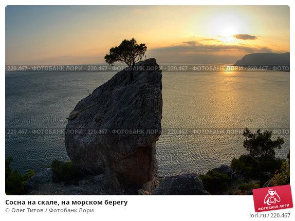Сосна на скале, на морском берегу, фото № 220467, снято 26 сентября 2017 г. (c) Олег Титов / Фотобанк Лори