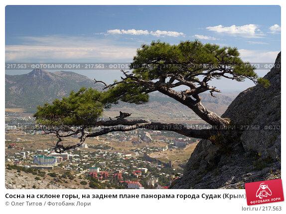 Сосна на склоне горы, на заднем плане панорама города Судак (Крым), фото № 217563, снято 18 сентября 2006 г. (c) Олег Титов / Фотобанк Лори