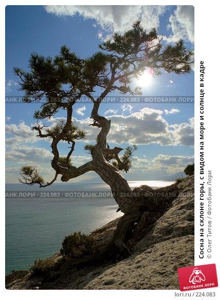 Сосна на склоне горы, с видом на море и солнце в кадре, фото № 224083, снято 27 марта 2017 г. (c) Олег Титов / Фотобанк Лори