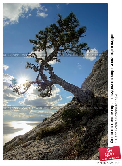 Сосна на склоне горы, с видом на море и солнце в кадре, фото № 224111, снято 21 сентября 2017 г. (c) Олег Титов / Фотобанк Лори