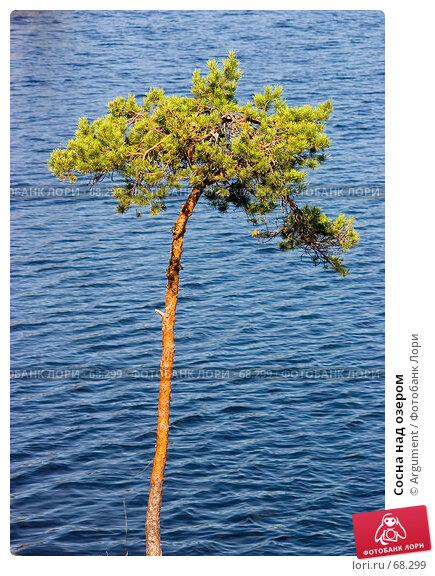 Купить «Сосна над озером», фото № 68299, снято 11 августа 2006 г. (c) Argument / Фотобанк Лори