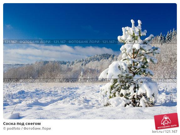 Сосна под снегом, фото № 121167, снято 5 ноября 2007 г. (c) podfoto / Фотобанк Лори
