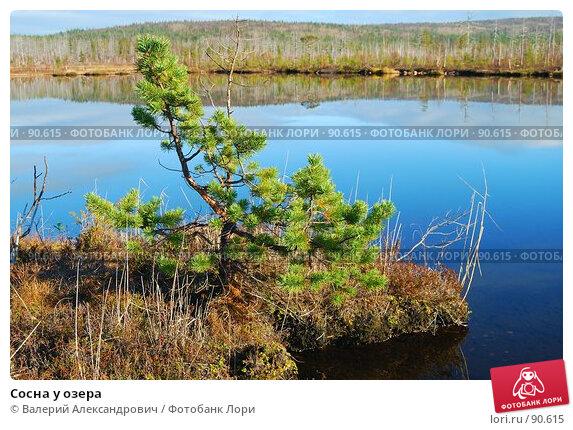 Сосна у озера, фото № 90615, снято 28 июля 2017 г. (c) Валерий Александрович / Фотобанк Лори