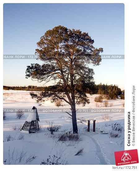 Купить «Сосна у родника», фото № 172751, снято 2 января 2008 г. (c) Бяков Вячеслав / Фотобанк Лори