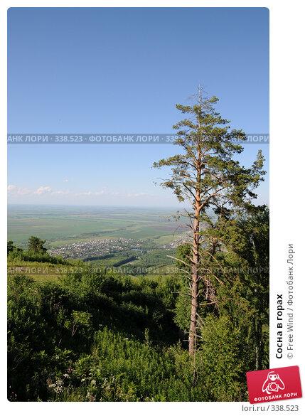 Сосна в горах, эксклюзивное фото № 338523, снято 25 июня 2008 г. (c) Free Wind / Фотобанк Лори