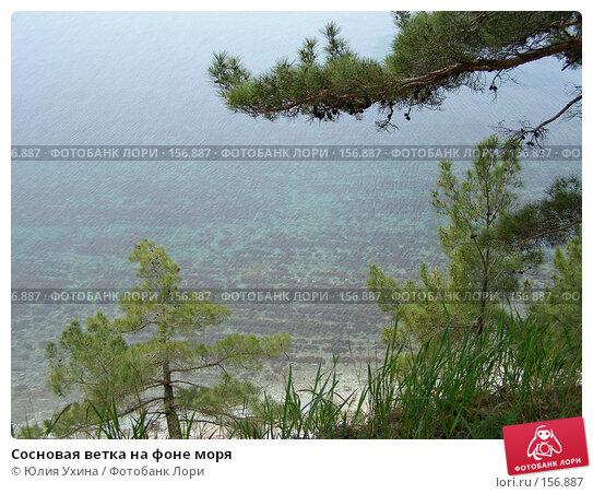 Сосновая ветка на фоне моря, фото № 156887, снято 5 апреля 2005 г. (c) Юлия Ухина / Фотобанк Лори
