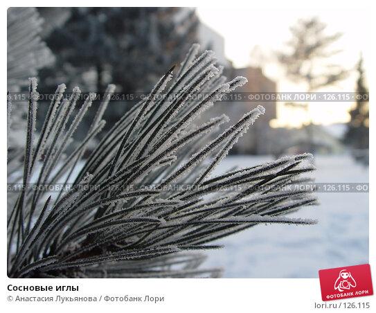 Купить «Сосновые иглы», фото № 126115, снято 2 февраля 2006 г. (c) Анастасия Лукьянова / Фотобанк Лори