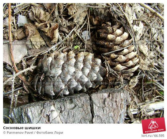 Сосновые шишки, фото № 66595, снято 8 мая 2005 г. (c) Parmenov Pavel / Фотобанк Лори