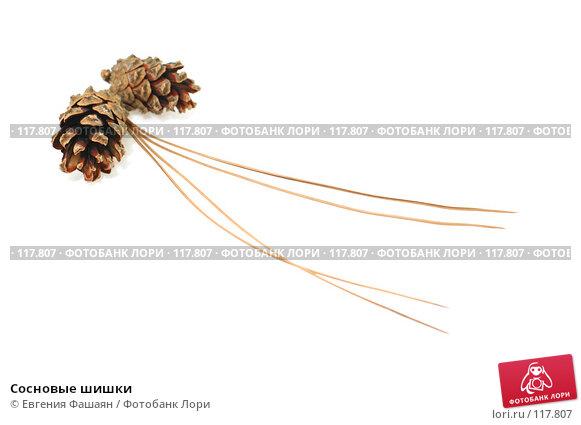 Сосновые шишки, фото № 117807, снято 12 ноября 2007 г. (c) Евгения Фашаян / Фотобанк Лори