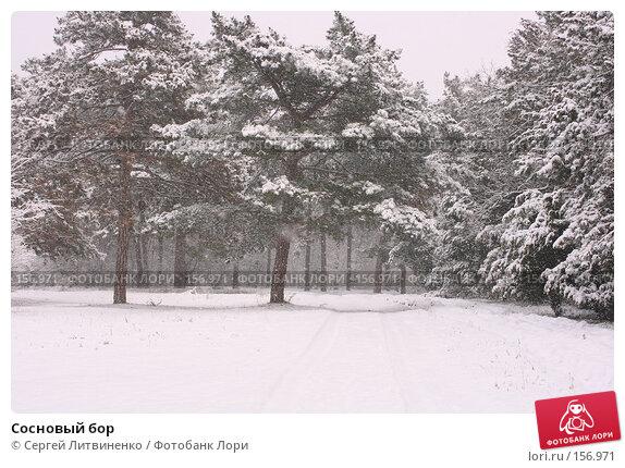 Сосновый бор, фото № 156971, снято 16 декабря 2007 г. (c) Сергей Литвиненко / Фотобанк Лори