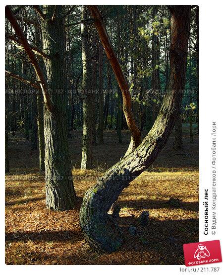 Купить «Сосновый лес», фото № 211787, снято 13 декабря 2017 г. (c) Вадим Кондратенков / Фотобанк Лори