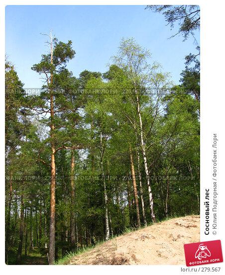 Купить «Сосновый лес», фото № 279567, снято 10 мая 2008 г. (c) Юлия Селезнева / Фотобанк Лори