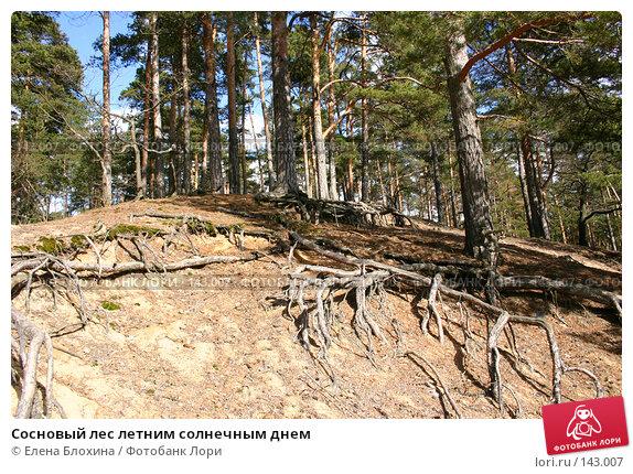 Сосновый лес летним солнечным днем, фото № 143007, снято 16 марта 2007 г. (c) Елена Блохина / Фотобанк Лори