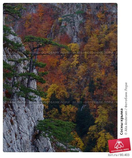 Купить «Сосны крыма», фото № 80403, снято 26 октября 2006 г. (c) Alla Andersen / Фотобанк Лори