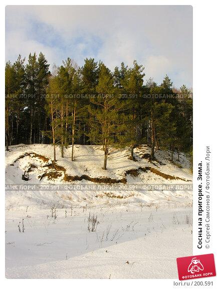 Купить «Сосны на пригорке. Зима.», фото № 200591, снято 3 февраля 2008 г. (c) Сергей Самсонов / Фотобанк Лори
