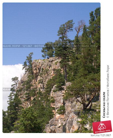 Сосны на скале, фото № 121067, снято 5 августа 2007 г. (c) Вячеслав Потапов / Фотобанк Лори
