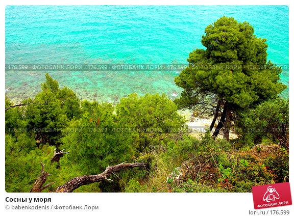 Сосны у моря, фото № 176599, снято 30 апреля 2006 г. (c) Бабенко Денис Юрьевич / Фотобанк Лори