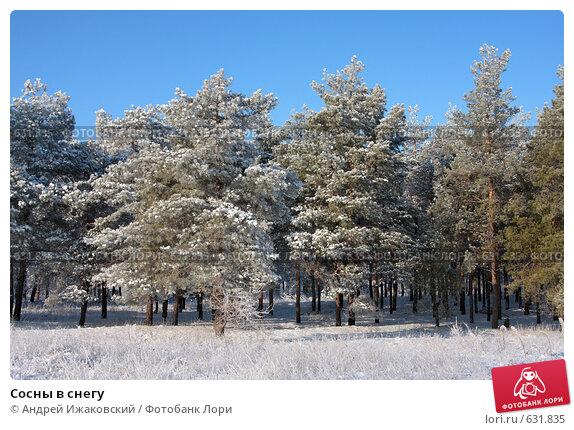 Сосны в снегу; фото № 631835, фотограф Андрей Ижаковский ...: http://lori.ru/631835