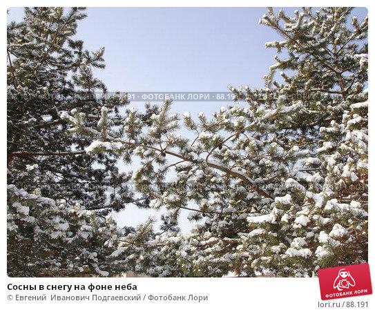Сосны в снегу на фоне неба, фото № 88191, снято 16 февраля 2006 г. (c) Евгений  Иванович Подгаевский / Фотобанк Лори
