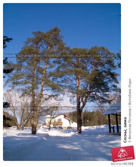 Сосны, зима, фото № 60059, снято 24 февраля 2007 г. (c) Вячеслав Потапов / Фотобанк Лори