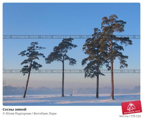 Сосны зимой, фото № 179123, снято 25 декабря 2004 г. (c) Юлия Селезнева / Фотобанк Лори