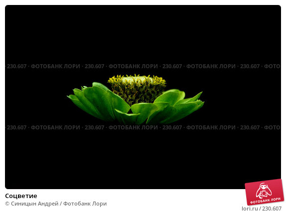 Купить «Соцветие», фото № 230607, снято 24 августа 2007 г. (c) Синицын Андрей / Фотобанк Лори