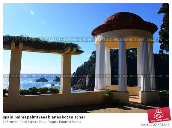 Купить «spain palms palmtrees blanes botanischer», фото № 27823347, снято 26 февраля 2018 г. (c) PantherMedia / Фотобанк Лори