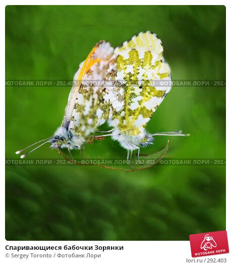 Спаривающиеся бабочки Зорянки, фото № 292403, снято 18 мая 2008 г. (c) Sergey Toronto / Фотобанк Лори