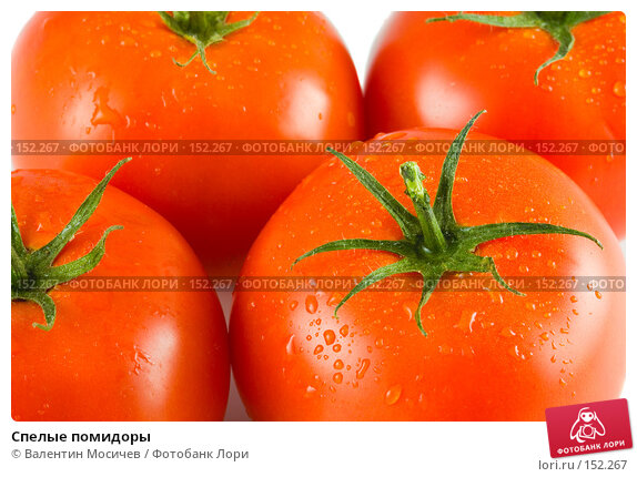 Спелые помидоры, фото № 152267, снято 14 октября 2007 г. (c) Валентин Мосичев / Фотобанк Лори