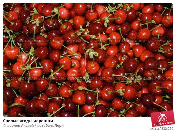 Спелые ягоды черешни, фото № 332279, снято 5 июня 2008 г. (c) Фролов Андрей / Фотобанк Лори